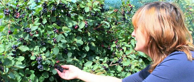 Fruitplukker_01